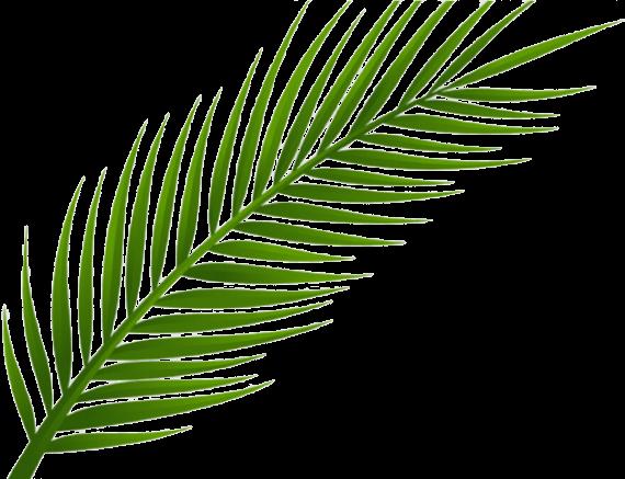 Palm Leaf 1 1