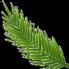 Palm Leaf 2 1